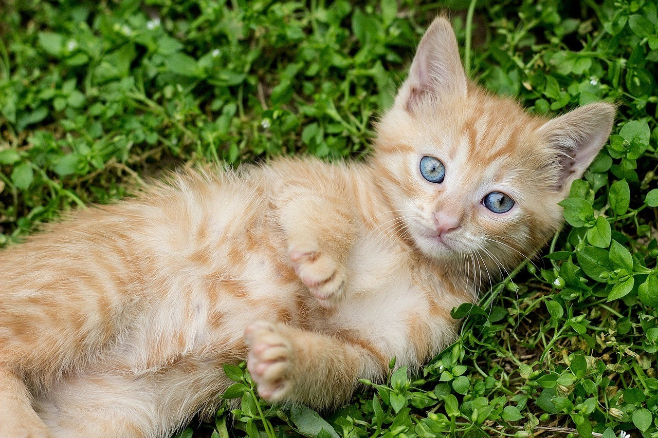 How to adopt a cat?